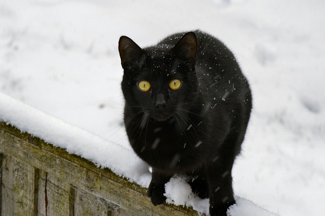 cat snow photo